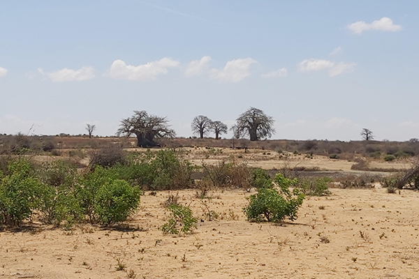 Twiga-Tanzania